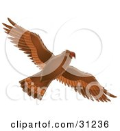 Clipart Illustration Of A Flying Brown Hawk With Its Wings Spanned As Seen From Below