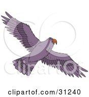 Flying Purple Hawk As Seen From Below Its Wings Spanned