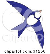 Flying White And Blue Bird With Its Wings Spanned
