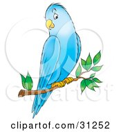 Clipart Illustration Of A Friendly Blue Parakeet Perched On A Tree Branch by Alex Bannykh