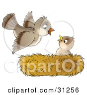 Clipart Illustration Of A Cute Baby Bird In A Nest Looking Up At Its Mother As She Arrives Home