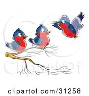 Clipart Illustration Of A Blue And Red Robin Flying Towards Two Others Perched On A Branch