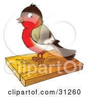 Clipart Illustration Of A Cute Brown And Red Robin Bird Eating Seed On A Slab Of Wood
