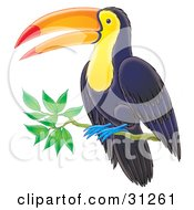 Clipart Illustration Of A Dark Blue Toucan With A Yellow Belly And Face Blue Feet And Orange And Red Beak Perched On A Branch by Alex Bannykh