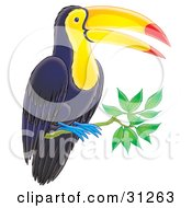 Clipart Illustration Of A Perching Dark Blue Toucan With A Yellow Belly And Face Blue Feet And Orange And Red Beak by Alex Bannykh