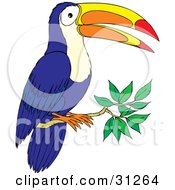 Blue Toucan With A Colorful Beak Perched On A Tree Branch