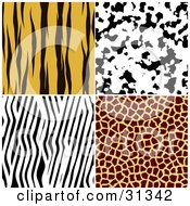 Clipart Illustration Of A Set Of Four Tiger Dalmation Zebra And Giraffe Fur Patterned Backgrounds