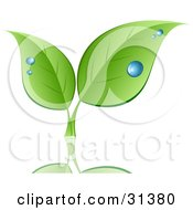 Clipart Illustration Of Two Sprouting Green Leaves With Drops Of Dew Over A Reflecting Surface by KJ Pargeter