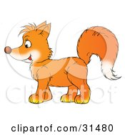 Clipart Illustration Of A Bushy Tailed Orange Fox Kit In Profile Facing To The Left by Alex Bannykh