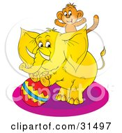 Cute Monkey On The Back Of A Circus Elephant Standing Up On A Ball On A White Background