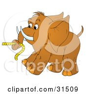Cute Brown Elephant With Tusks Pulling On Rope With Its Trunk On A White Background