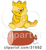 Overweight Yellow Cat Sitting In Front Of A Roll Of Sausage