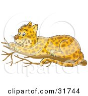 Clipart Illustration Of A Cute Spotted Leopard Resting On A Tree Branch by Alex Bannykh