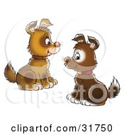 Clipart Illustration Of Two Brown Puppies Wearing Collars Facing Each Other And Sitting