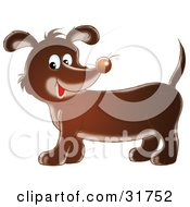 Cute Dachshund Dog With Whiskers On His Nose Smiling At The Viewer