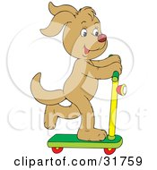 Tan Dog Having Fun While Riding On A Scooter