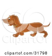 Clipart Illustration Of An Adorable Brown Dackel Dog Walking To The Left