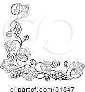 Clipart Illustration Of A Black And White Grape Vine With Bunches Of Grapes And Leaves Curling Along A Bottom Left Corner Edge by AtStockIllustration