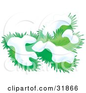 Clipart Illustration Of A Snow Flocked Evergreen Tree Branch
