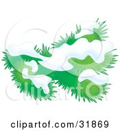 Clipart Illustration Of Snow On An Evergreen Tree Branch