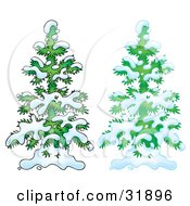 Clipart Illustration Of Two Snow Flocked Evergreen Trees One With An Airbrush Appearance