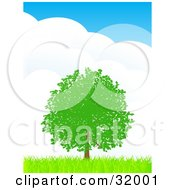 Clipart Illustration Of A Lush Green Tree With Foliage In A Flat Landscape Of Green Grass Against A Blue Sky With Large Puffy Clouds