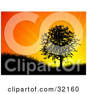Clipart Illustration Of A Bursting Orange Sunrise Or Sunset Silhouetting A Tree On A Hill In Black