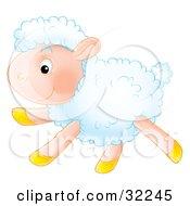 Energetic White Lamb Running
