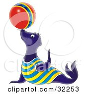 Talented Blue Sea Lion Balancing A Colorful Ball On His Nose