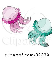 Two Green And Purple Jellyfish Swimming
