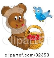 Bluebird Flying Over A Bear Snacking On Raspberries In A Basket
