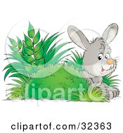 Clipart Illustration Of A Cute Gray Bunny Hiding Behind A Bush In Plants