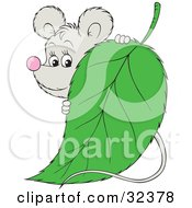 Clipart Illustration Of A Cute Gray Mouse Peeking Around A Green Leaf by Alex Bannykh