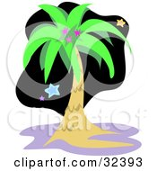 Clipart Illustration Of A Lush Palm Tree Against A Black Night Sky With Colorful Stars by bpearth