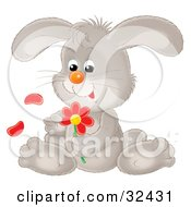 Clipart Illustration Of A Cute Gray Bunny Rabbit Sitting And Picking Petals Off Of A Red Daisy Flower