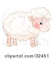 Cute Pink Sheep With Fluffy Wool Standing In Profile And Glancing At The Viewer