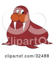 Clipart Illustration Of A Sharp Tusked Walrus Looking At The Viewer by Alex Bannykh
