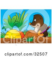 Clipart Illustration Of A Gopher Wearing Glasses Digging Up Two Big Juicy Carrots In A Garden