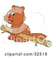 Cute Beaver Carrying A Wooden Log