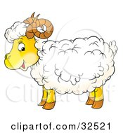 Happy Fluffy Sheep With Curly Horns Standing In Profile Glancing At The Viewer