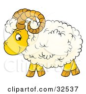 Curly Horned Sheep With Fluffy Wool In Profile Glancing At The Viewer