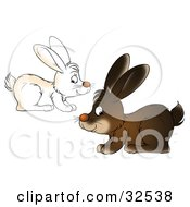 Clipart Illustration Of Two White And Brown Bunnies Hopping By In Opposite Directions