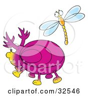 Friendly Dragonfly Socializing With A Pink Beetle