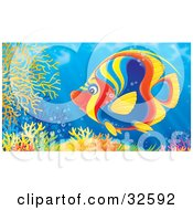 Clipart Illustration Of A Vibrantly Colored Red Blue Yellow And Orange Angelfish Swimming Over A Colorful Coral Reef