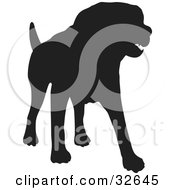 Standing Dog Silhouetted In Black