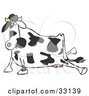 Clipart Illustration Of A Black And White Dairy Cow After Slipping Its Hind Legs Sprawled Out