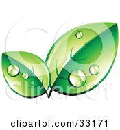 Clipart Illustration Of A Pre Made Logo Of Organic Green Leaves Wet With Dew