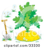 Clipart Illustration Of A Shovel In The Ground With White Flowers Around A Giant Turnip by Alex Bannykh