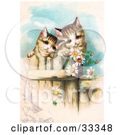 Clipart Illustration Of Two Curious Victorian Kittens Peering Over A Wooden Fence Gazing At Daisy Flowers