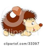 Mushroom Stuck To A Hedgehogs Back